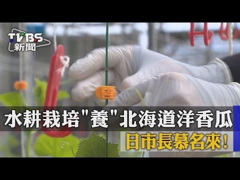 【TVBS】水耕栽培「養」北海道洋香瓜 日市長慕名來!