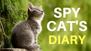 Funny Video: Diary of a Captured Spy Cat