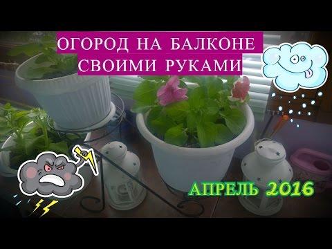 DIY: ОГОРОД НА БАЛКОНЕ СВОИМИ РУКАМИ АПРЕЛЬ 2016.