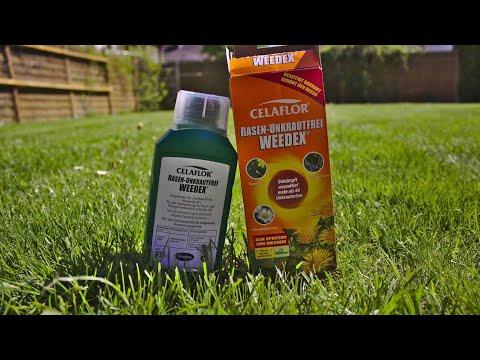 Unkraut im Garten | Celaflor Rasen-Unkrautfrei Weedex (Abschließende Meinung)