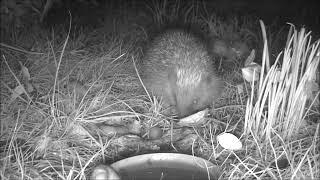 Wildlife Trail Camera - 19.9.2019