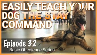 EASILY Teach Your Dog The STAY Command.