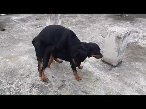 Rottweiler Dog Matting