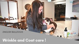 How to Clean an English Bulldogs Wrinkles - Tips and Tricks