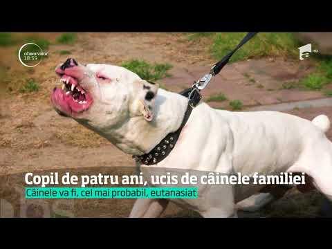 Scene cumplite în Maramureş, unde un băieţel de patru ani a fost sfâşiat şi ucis de câinele familiei