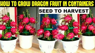How To Grow Dragon Fruit | FULL INFORMATION