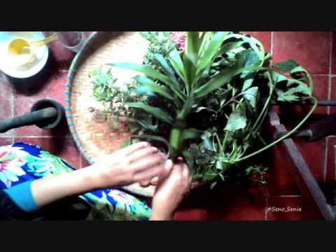 Video Tips Herbal   Mengobati Penyakit Paru paru dengan daun Suji