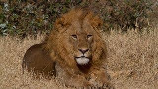 19-day Kenya And Tanzania African Wildlife Safari (2013)