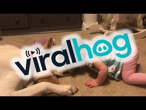 Hund küsst Kleinkind