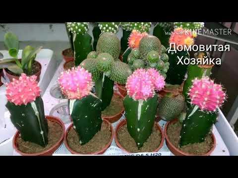 Красивые ЦВЕТЫ в ЛЕРУА МЕРЛЕН/ цены на комнатные цветы/ the flowers #ДомовитаяХозяйка