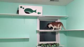 Project Catification - The Fish Room!