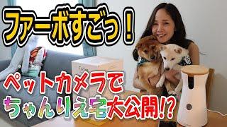 【Furbo(ファーボ)】愛犬家に大人気のドッグカメラが超お得に購入できる!!ちゃんりえの愛犬も初登場★