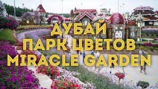 VLOG:Дубай, ОАЭ/ Чудо-сад Miracle Garden. Часть 2/ Куда сходить, что посмотреть в Эмиратах