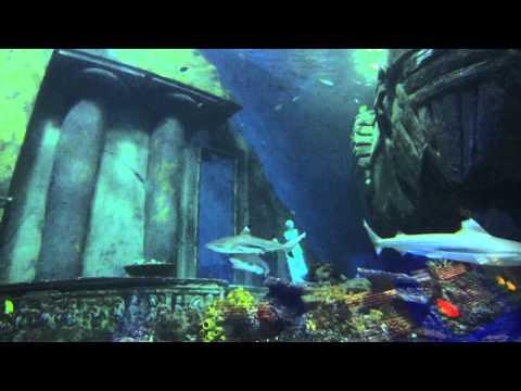 GoPro Hero3 Test im Sea Life (2012 ), Sea Life München (High Life Divers),Bayern,Deutschland
