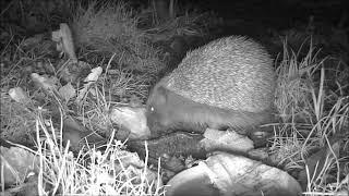 Wildlife Trail Camera - 10.12.2018