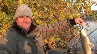 Ловим жереха на Волге весной и осенью