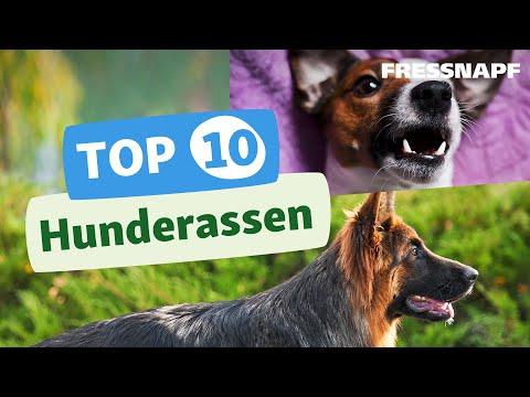 Top 10 Hunderassen