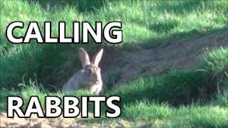 The mystic art of calling rabbits.....