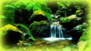 Веселый Лесной Ручей - Релаксация / Relaxing Forest Creek