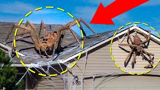 Real Giant Spiders Caught On Camera & Spotted In Real Life!