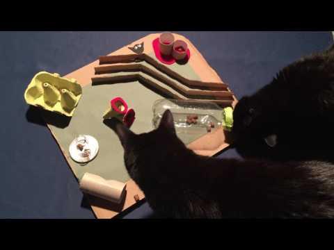 DIY Cat Activity fun Board Toy