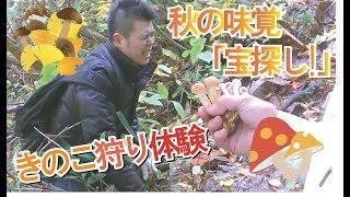 秋の味覚・お宝探し!「きのこ狩り体験」