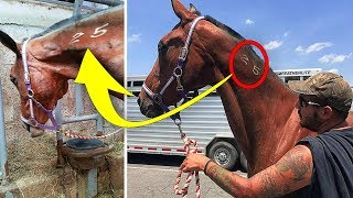 When A Man Saved A Horse From The Slaughterhouse, Her Response To Freedom Touched His Heart Deeply