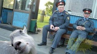 Приколы по Русски!!! Умом Россию не понять 2015!!!