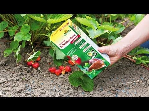 Mittel gegen Schnecken im Garten - Neudorff Ferramol Schneckenkorn compact