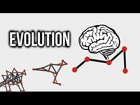 Evolution Simulator Video 1