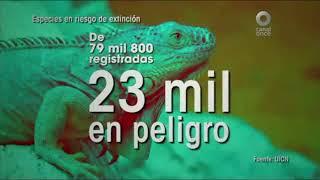 Especiales Noticias - La extinción, un camino sin retorno