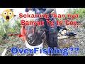 Mancing Disini bikin Ga Mau Pulang Saking Banyaknya Ikan Gabus Haruan Bujuk Betok Kapar EP#24 part 3
