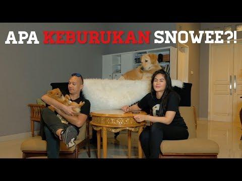 APA KEBURUKAN SNOWEE? KNP PILIH NAMA SNOWEE? (Q&A Part 1) | SNOWEE THE GOLDEN