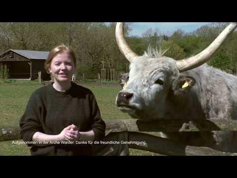 PROVIEH erklärt - Alte Nutztierrassen