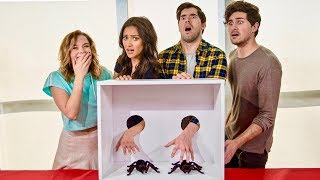 WHAT'S IN THE BOX? ft. Shay Mitchell and Anthony Padilla