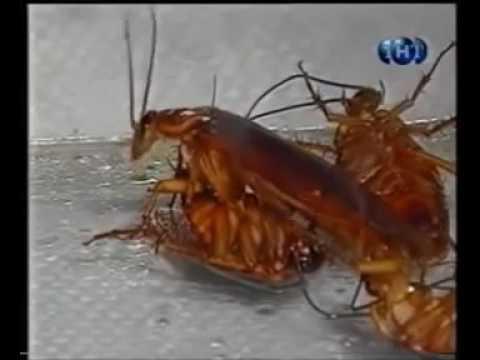 Причины вызывающие появление тараканов в доме.