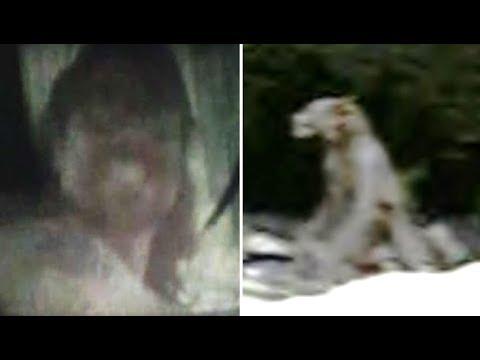 4 Real Life Dogman Sightings & Encounters | Compilation