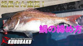 鯛の締め方〆船長さん直伝!Redseabreamcutting