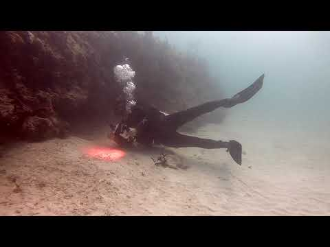 Scuba diving in JARDINES in Mexico