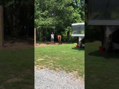 Video Of Randy's Horse Camp, GA