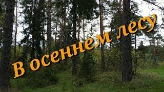 """Ярославская""""Беловежская"""" пуща. В осеннем лесу"""
