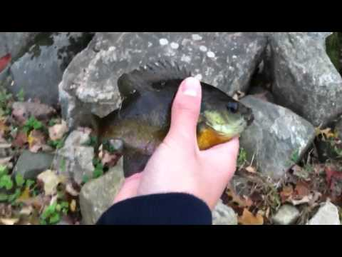 Multispecies Creek and Pond Fishing