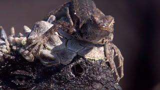 Weirdest Animal Relationships | Top 5 | BBC Earth