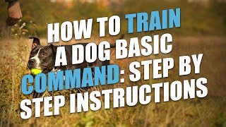 How To Train A Dog Basic Commands: Step by Step Instructions