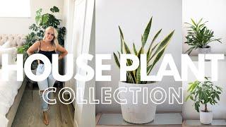 INDOOR PLANT COLLECTION   Best Indoor Plants   House Plants 2020