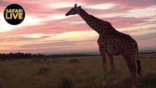 SafariLIVE   Sunrise Safari   March 27, 2019