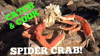 SPIDER CRAB ( Catch, Clean, Cook On The Rocks !