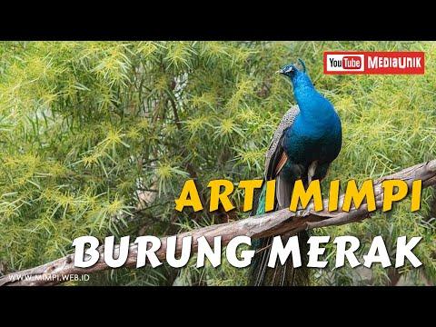 Arti Mimpi Burung Merak - Mimpi Burung Merak