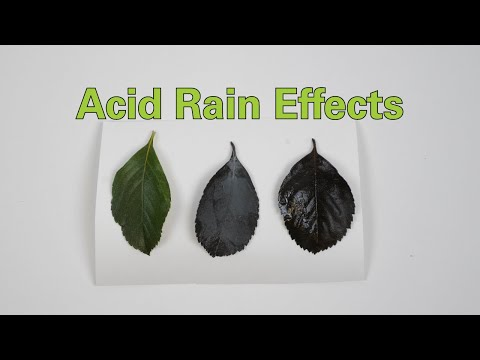 Acid Rain Effects - Activity - TeachEngineering