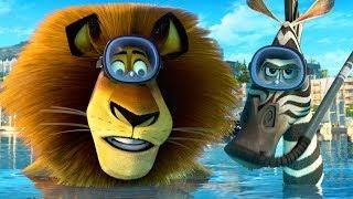DreamWorks Madagascar Em Português | Alex E Marty Melhores Momentos - Madagascar | Desenhos Animados